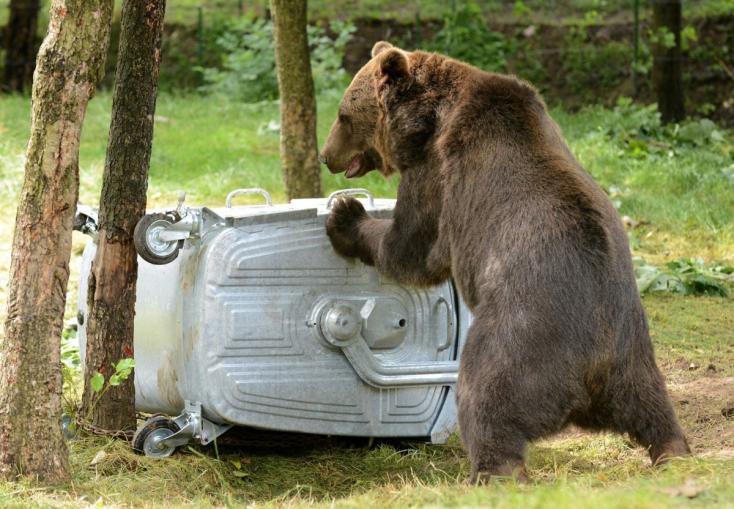 V okrese Senica sa pohybuje medvedica s mladými