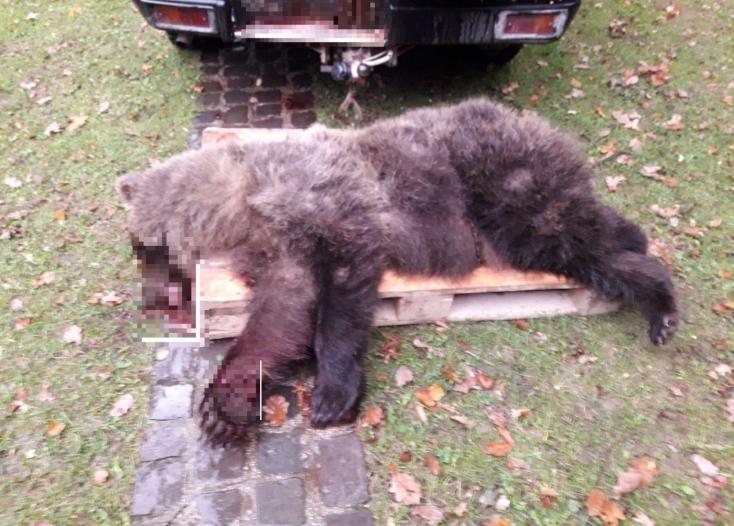 Pri Prievidzi zrazil vodič dodávky medveďa, ten neprežil