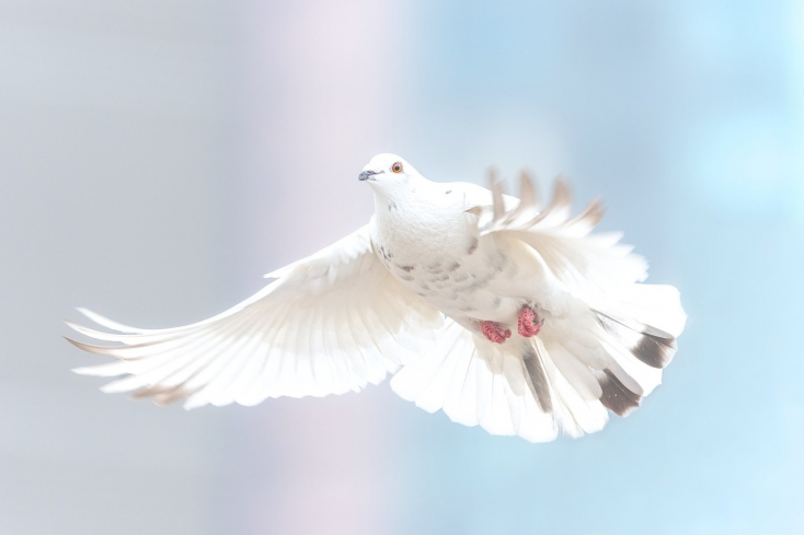 Vo Svetovom indexe mieru Slovensko skončilo na 23. mieste
