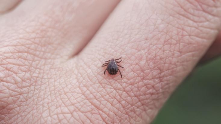 Komárno: RÚVZ upozorňuje na vysoký výskyt kliešťov vo viacerých lokalitách