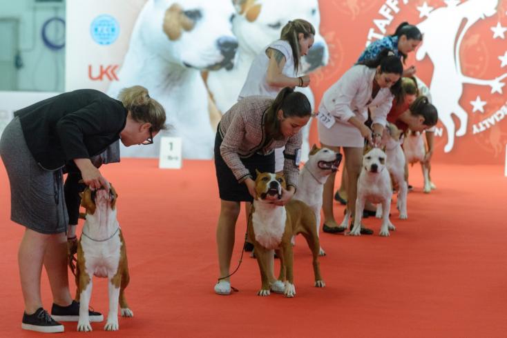 Na výstavisku sa stretli chovatelia psov z 32 krajín