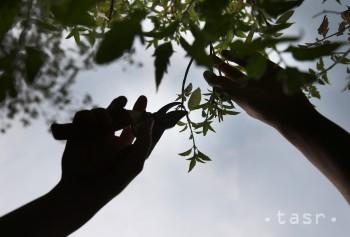 V parku na rohu Tomášikovej a Ružinovskej vysadia 90 nových stromov